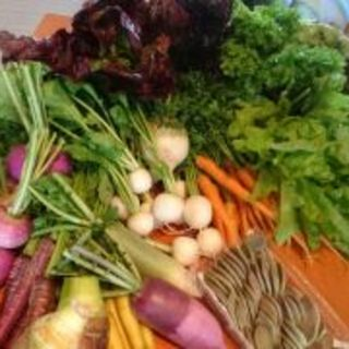 美味しい野菜珍しい野菜