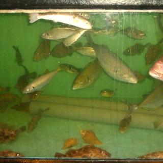 新鮮な魚介類もお楽しみいただけます!
