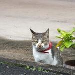 衣掛茶屋 - 「ならまち」のネコさん 岩合ですよ、おいで(ウソだけど)