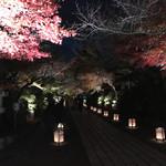 59394958 - 石山寺のライトアップされた参道♪