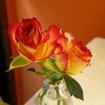 59456127 - テーブルのバラ