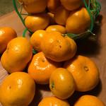 蒲郡オレンジパーク - みかん