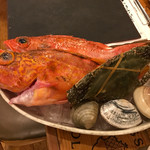 59486056 - 本日のおすすめ カサゴやホンビノス、はまぐり、渡り蟹など