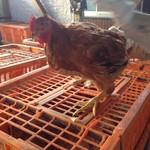 【宮崎】刀根赤鶏とは