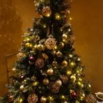ピッツェリア・サバティーニ - 日本だけど、もうクリスマスツリーが