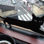 TRACTION book cafe - 黒猫のステッカー