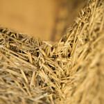 満寿屋商店 - 十勝の麦わらです。探してみてくださいね