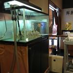 鮨処 魚喜 - 水槽は飼育されてるだけかな…
