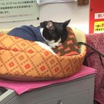 生鮮食品 ファスト長篠 - 幸運の招き猫の福ちゃんは寝ていました。