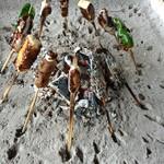 高森田楽村 - 3)味噌を塗って、軽く焦げめをつければ食べごろ