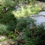 大徳寺一久 - 大徳寺一久 部屋から見た庭