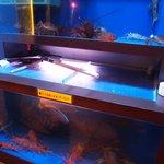 老香港酒家 - 入口には水槽 上海蟹って単品で8400円もするのね