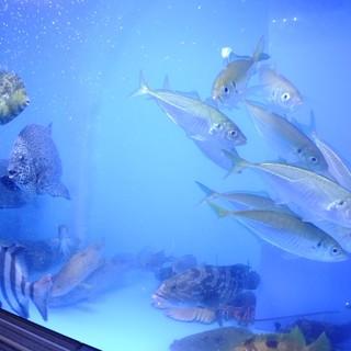 新鮮な魚がお待ちしております