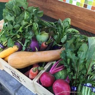 季節の味と色‼️[鎌倉野菜]‼️美味しい野菜も主役です