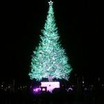 ラッキーピエロ - はこだてクリスマスファンタジー・クリスマスツリー