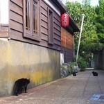 島京梵天 - 黒猫ちゃんがたいやきを狙ってるとか?