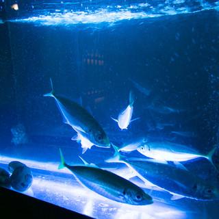 店内の生け簀から採った魚をその場で調理!