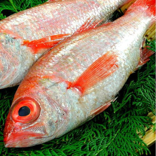産地直送鮮魚高知宿毛などより直送の一本魚。