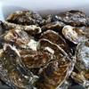 湧別かき生産組合 - 料理写真:今年も恒例牡蠣まつり