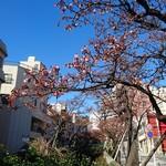 60755617 - 迎春            春はもうここに〜青空に映えるあたみ桜                       あたみ桜  二部咲き   でした                            (*^▽^)/★*☆♪   糸川      川沿い