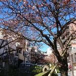 60757884 - 熱海  糸川 遊歩道          ガウディっぽいアートが沢山                          あたみ桜     咲いてました 〜♪