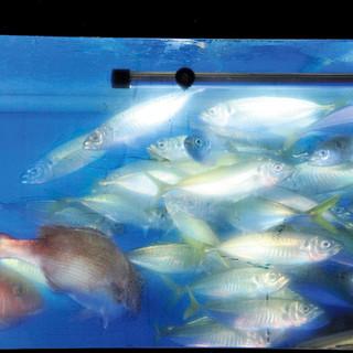 毎日、市場直送の魚を大漁入荷‼豊富な種類と鮮度に自信あり‼