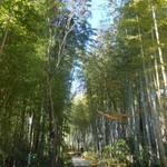 弘乃 - 竹林の小道 2016.12