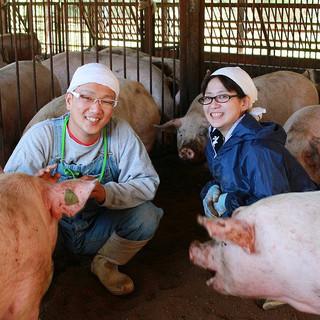 かがわのオリーブが讃岐の豚肉を変える!増田畜産の味豊豚を使用