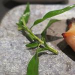 Kappoせな - 天然鯛 西京焼 ズームアップ