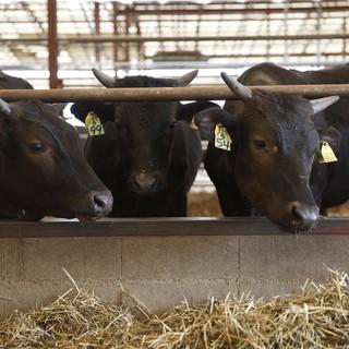 【有田牧場】完全無農薬で大切に育てられた黒毛和牛
