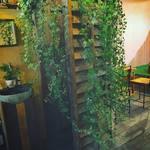 食堂 木洞商店 - 店内も植物でいっぱい