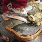 四十八漁場 - 本日の朝獲れ、めじなを