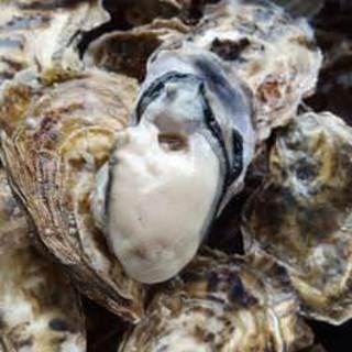北海道より直送◆新鮮魚貝類