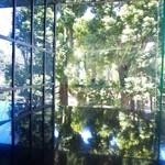 61325715 - テーブルに外の木々が映り込み素敵です。