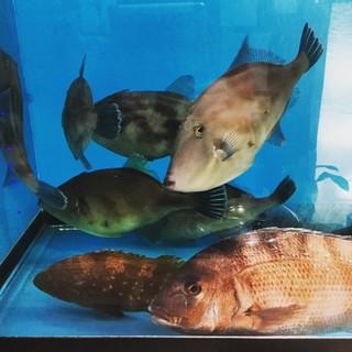 イケスの活魚をその場で調理します。
