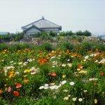 花のえん - 花畑から見た店舗です。