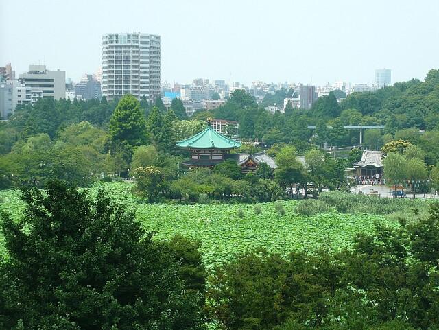 鰻割烹 伊豆栄 本店 - 7階からの忍ばず池の風景