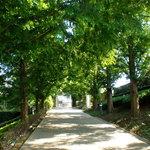 ブラフガーデンカフェ - 敷地内並木道