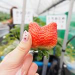 らいおん果実園 -