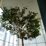 エスタシオン カフェ - ☆この木が目印☆彡