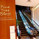 Pine Tree Bless -