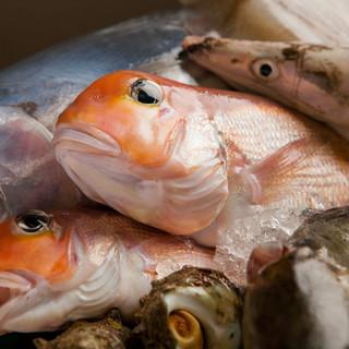 【直送新鮮魚介をどうぞ】福井県の若狭近郊から仕入れる魚介