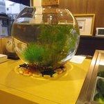 6219675 - 金魚鉢