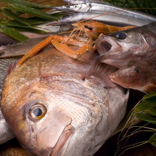 至高の魚を求め遠州灘、浜名湖から毎日直接仕入れ!!