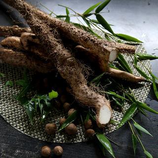 自然薯(じねんじょ)料理の数々