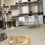 猫カフェ 柚の家 -