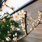 博多名代 吉塚うなぎ屋 - 場所的にも中洲やし梅も綺麗に咲いてから風情もあるけんお客しゃんも大分喜んどんしゃ~けん良かった♪