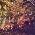 62587717 - 鹿の家族がやって来た