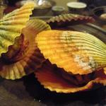 陽いずる紅の宿 勝浦観光ホテル - 緋扇貝焼き