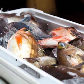 取れたての魚をご提供しております。